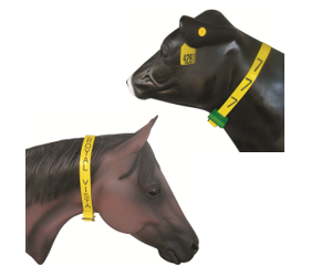 1 1/2″ Engraveable Neck Bands